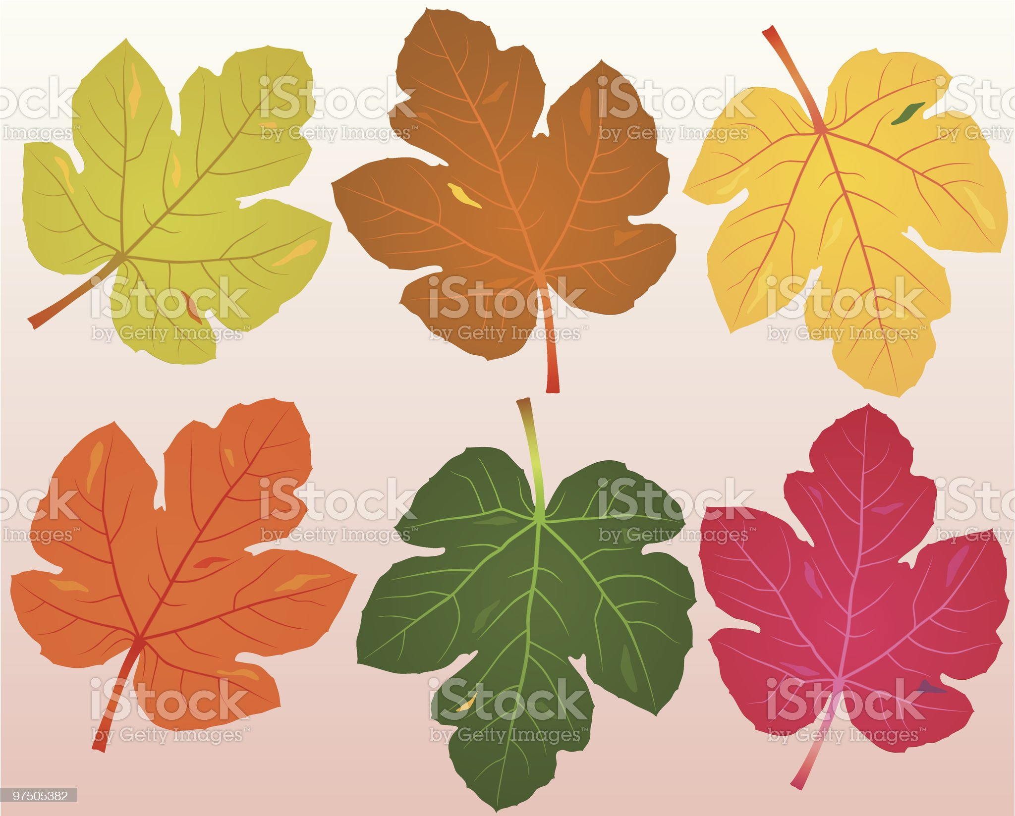 Fallen Fig Leaves royalty-free stock vector art