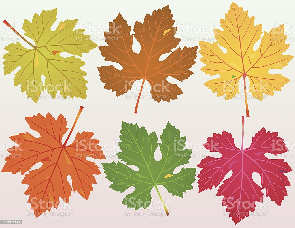Fallen Grapevine Leaves royalty-free stock vector art