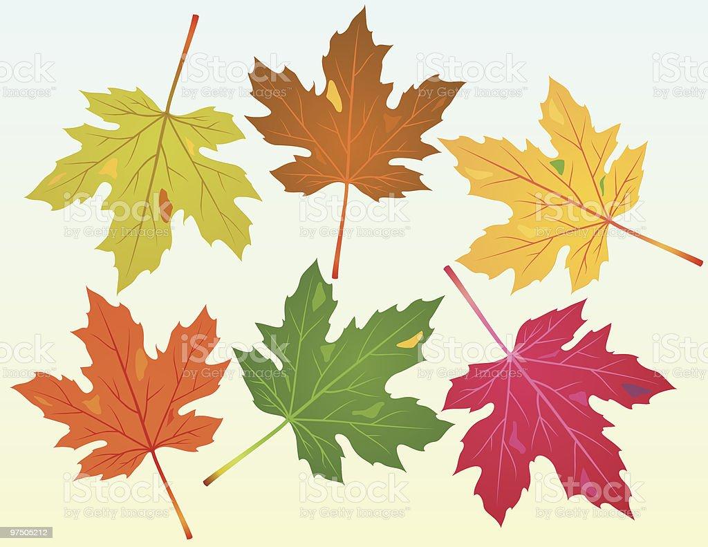 Fallen Maple Leaves vector art illustration