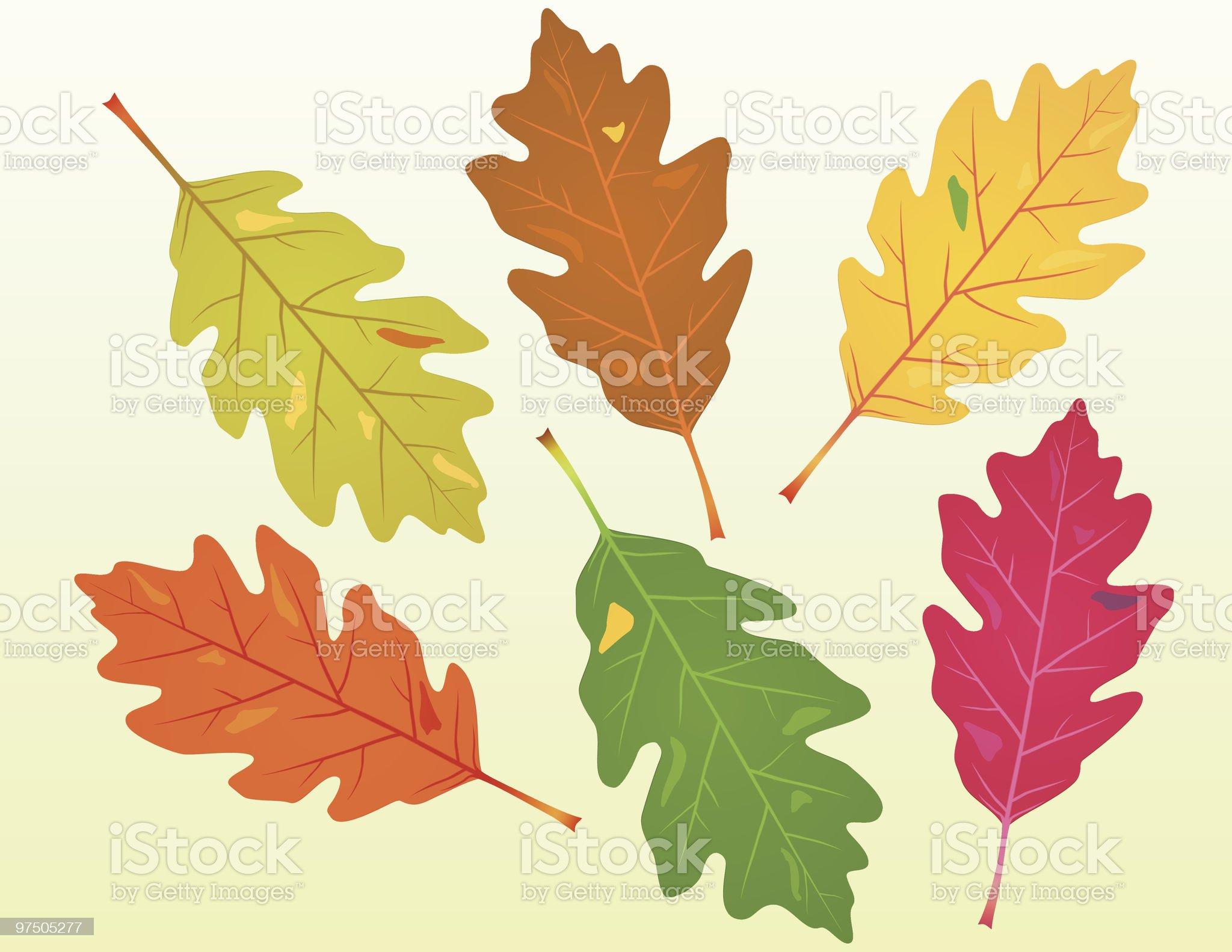 Fallen Oak Leaves royalty-free stock vector art