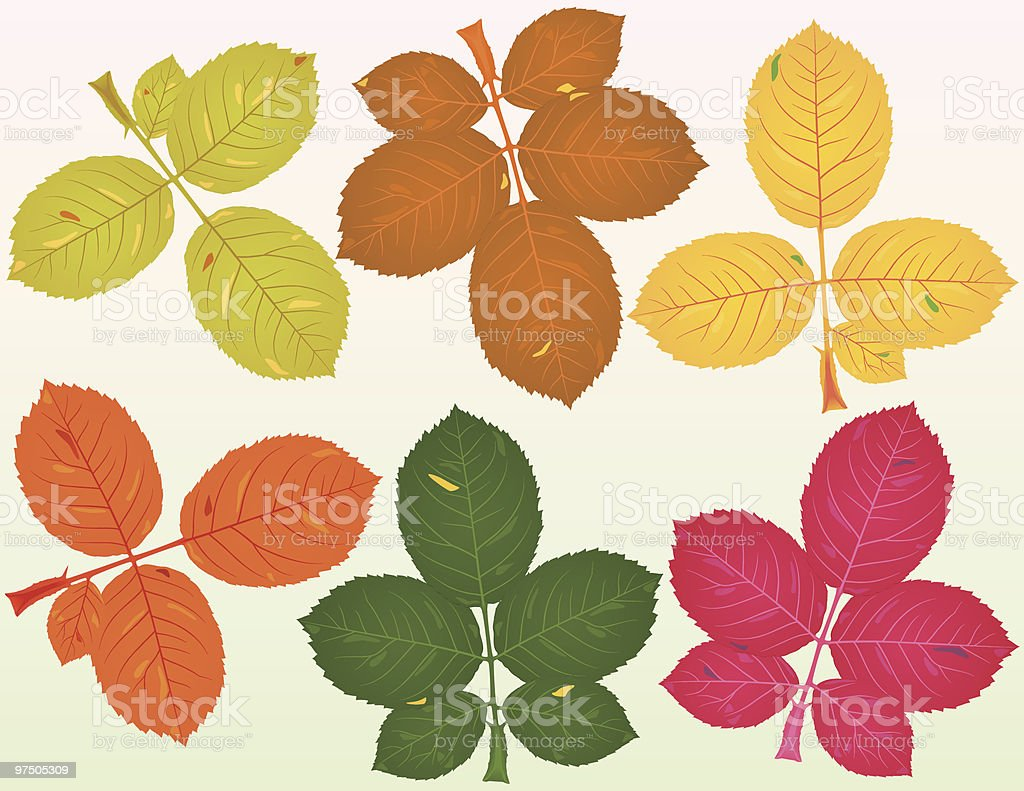 Fallen Rose Leaves royalty-free stock vector art
