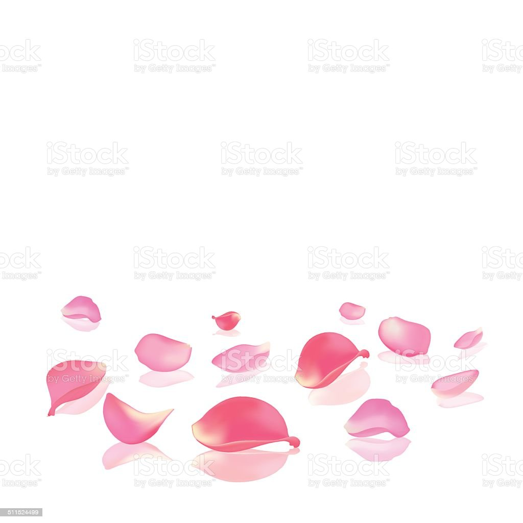 Falling rose peta vector art illustration