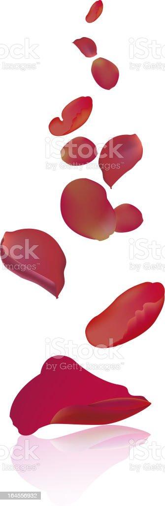 Falling rose petals vector art illustration