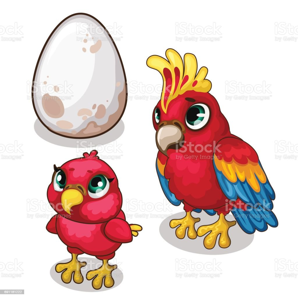 Family of parrots, parent, baby and egg. Vector vector art illustration