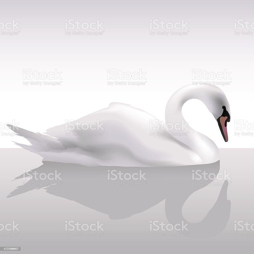 Fantastic swan (vector) royalty-free stock vector art