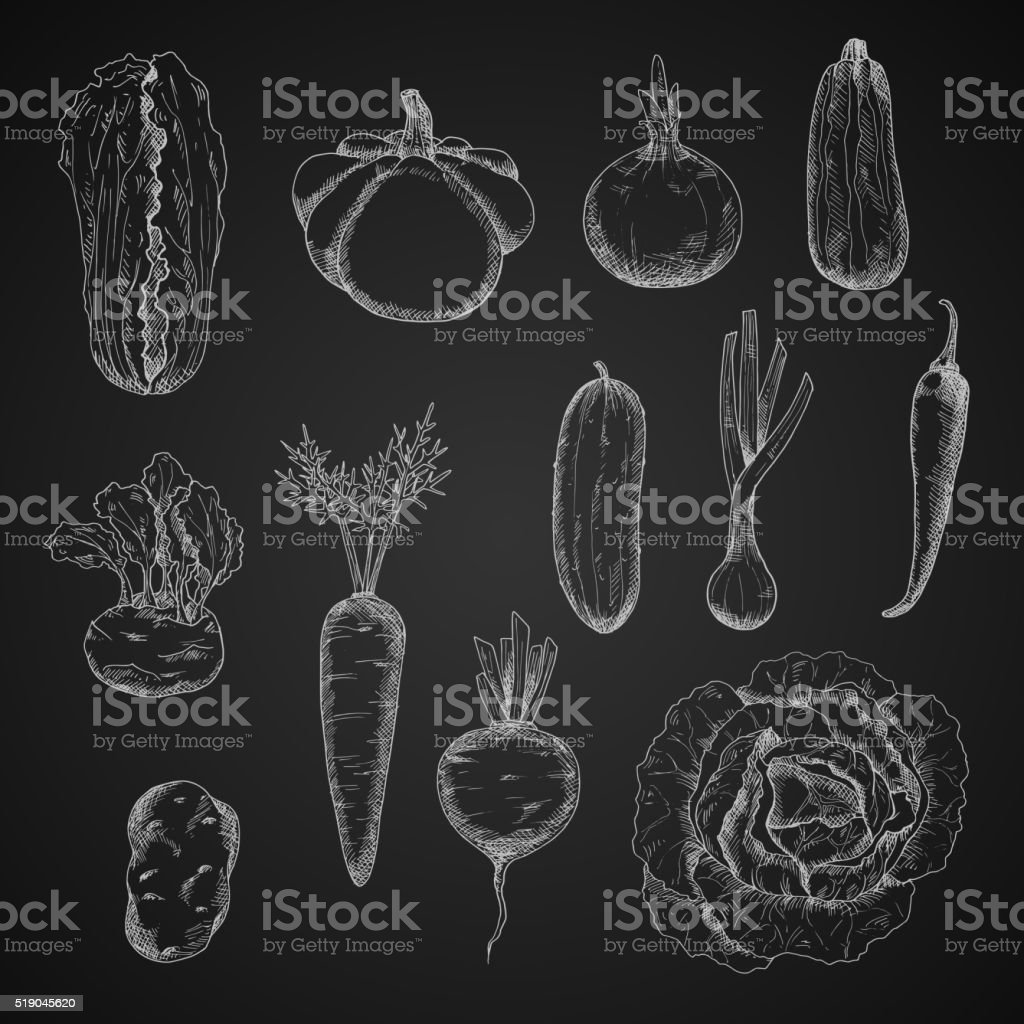 Farm and homegrown vegetables sketches vector art illustration