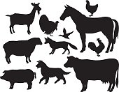 Farm Animals - Horse, Cow, Pig, Goat, Fox, Chicken, Rooster