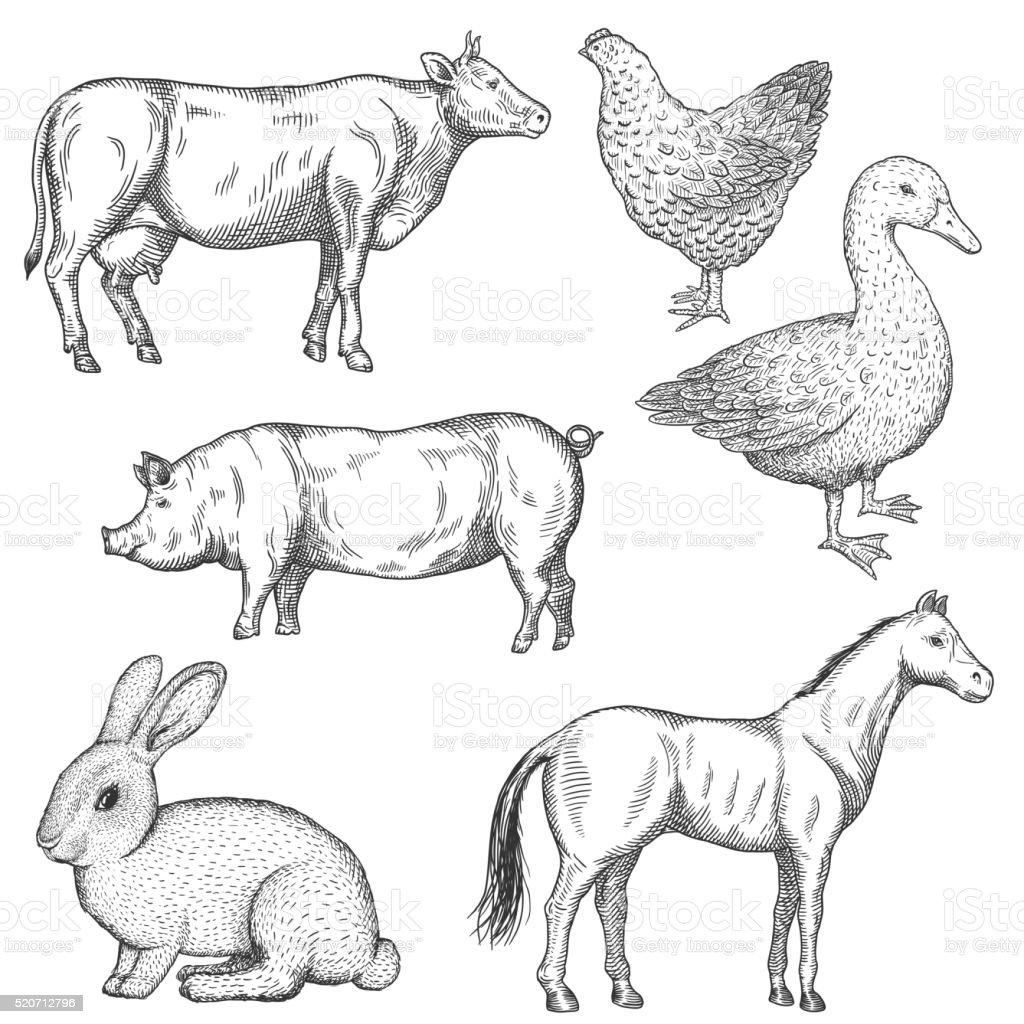 Farm animals set. vector art illustration