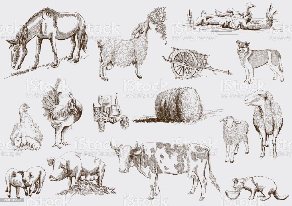 farm animals vector art illustration