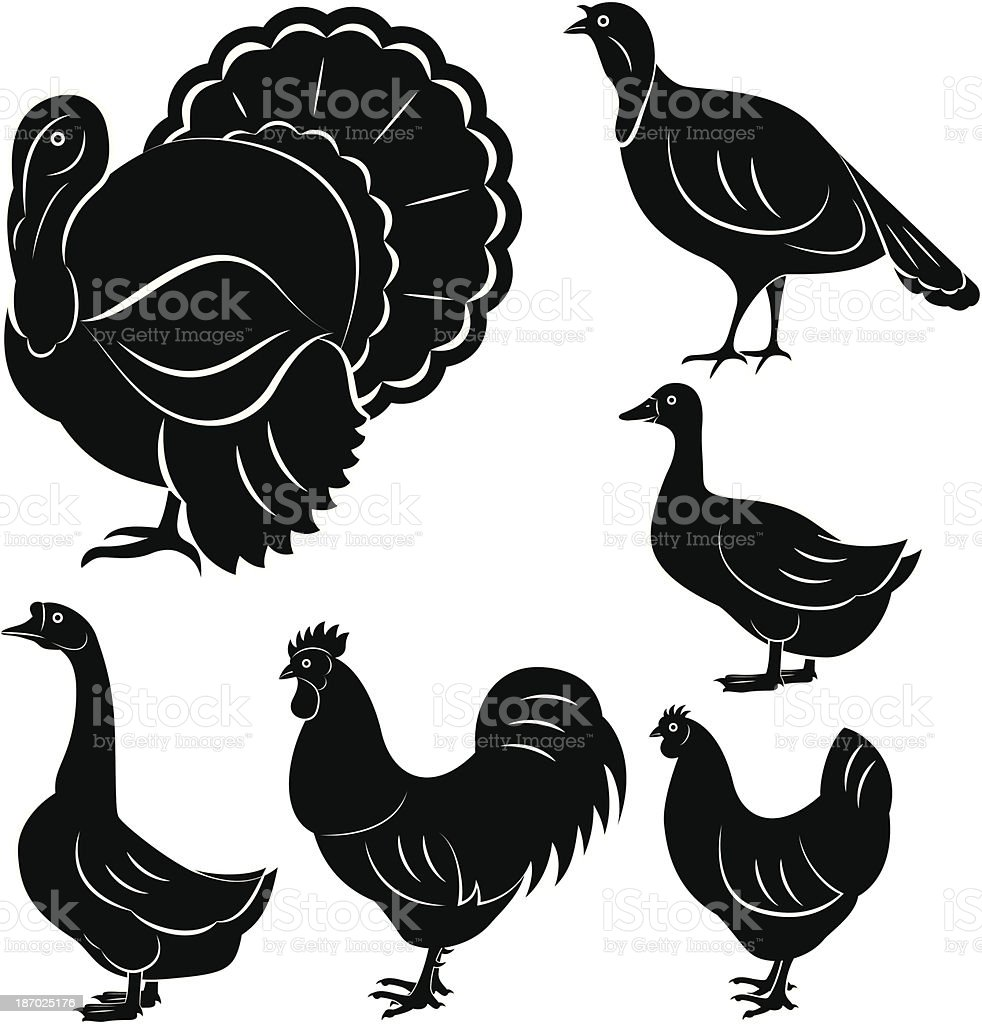 farm birds: turkey, goose, duck, rooster, chicken royalty-free stock vector art