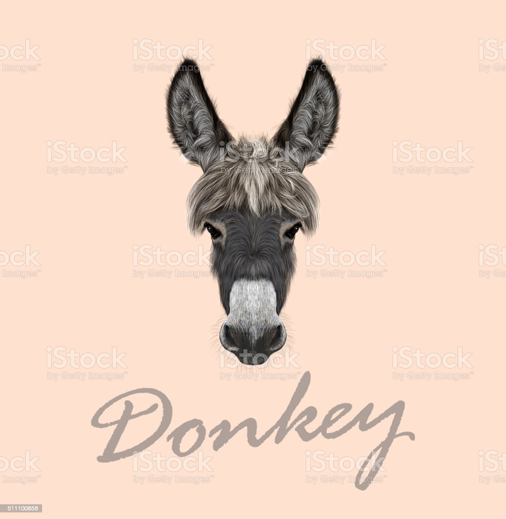 Farm Donkey portrait vector art illustration