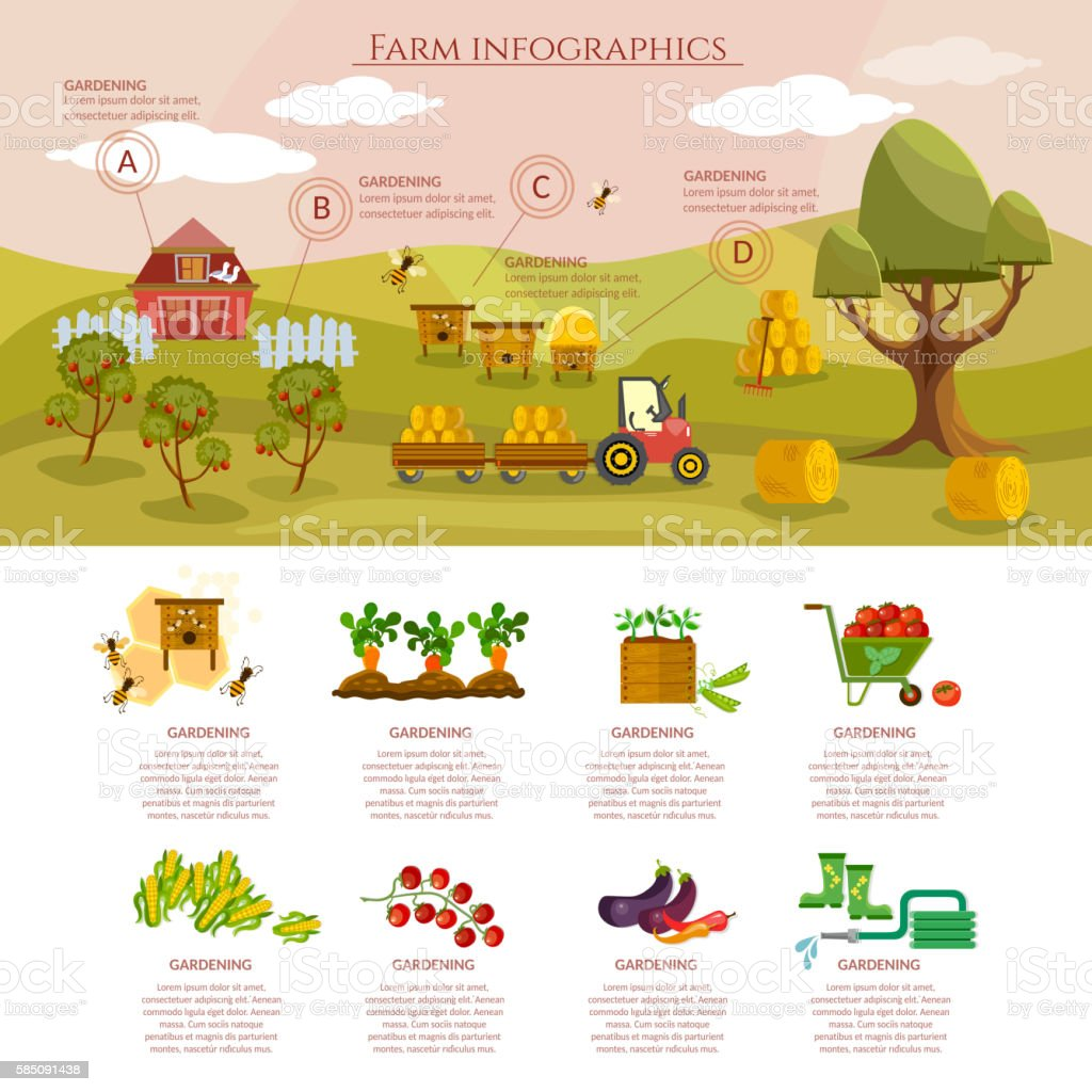 Farm infographics natural food agricultural objects vector art illustration