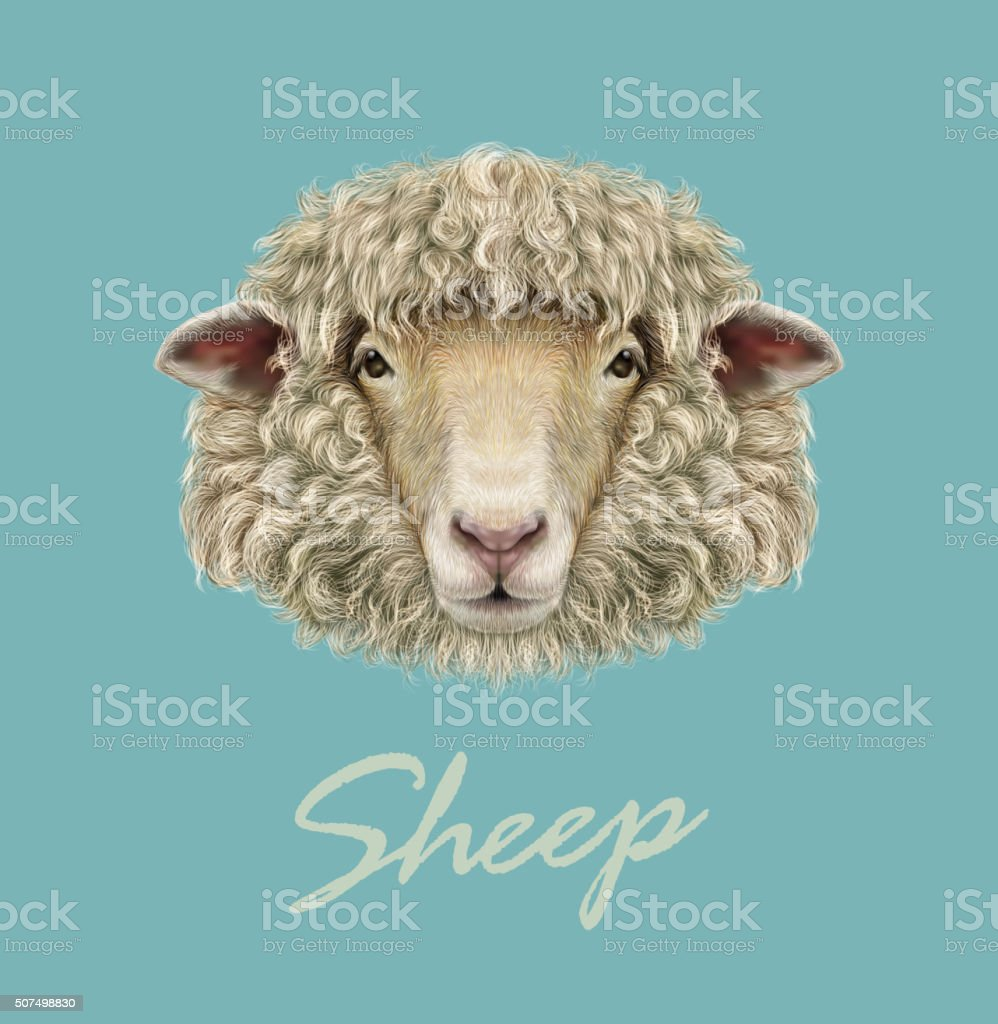 Farm Sheep Portrait. vector art illustration