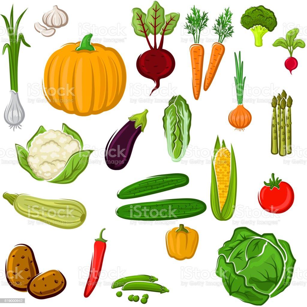 Farm vegetables for agriculture design vector art illustration