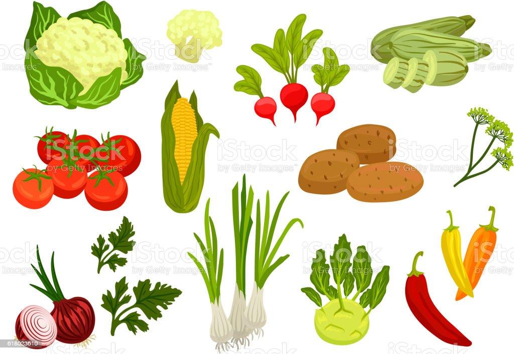 Farm vegetables isolated flat icons vector art illustration