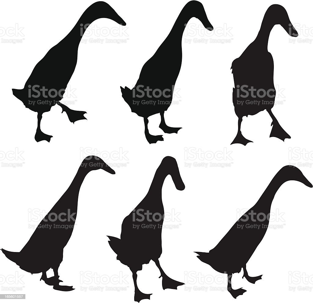 Farm Yard ducks vector art illustration