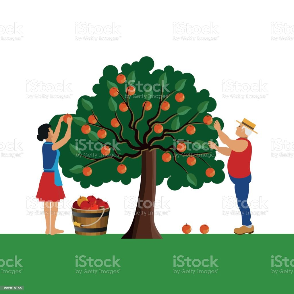 Farmers gathering apple vector art illustration