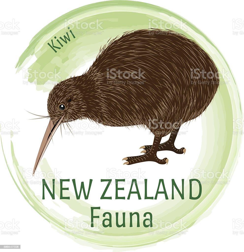 Fauna Of New Zealand. Kiwi vector art illustration