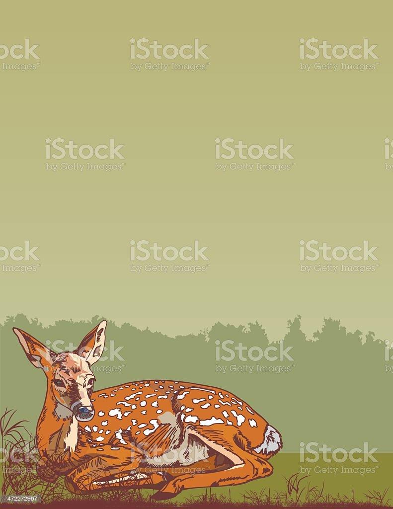 Fawn vector art illustration