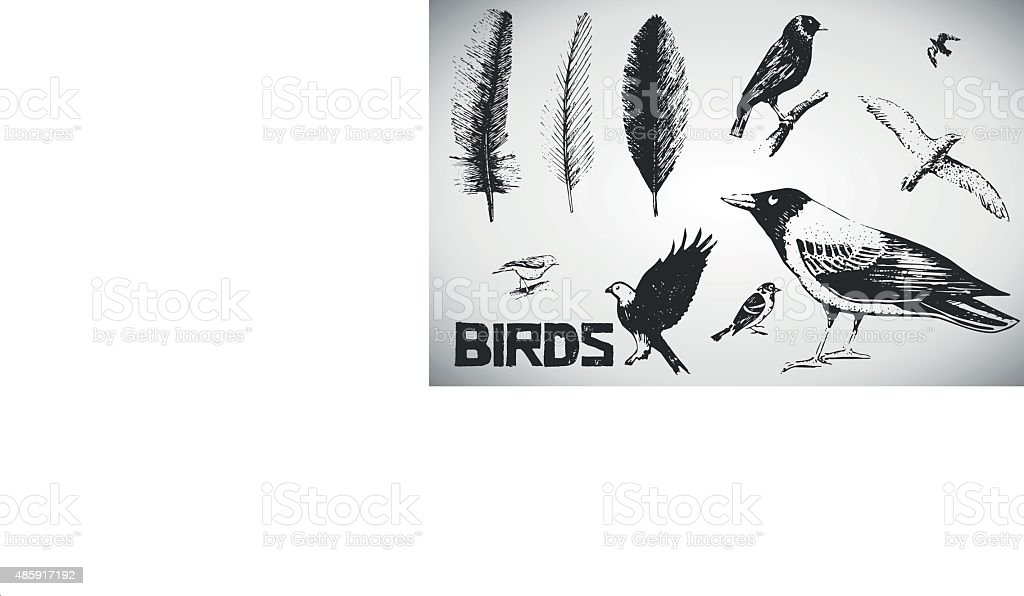 Feather and birds vector art illustration