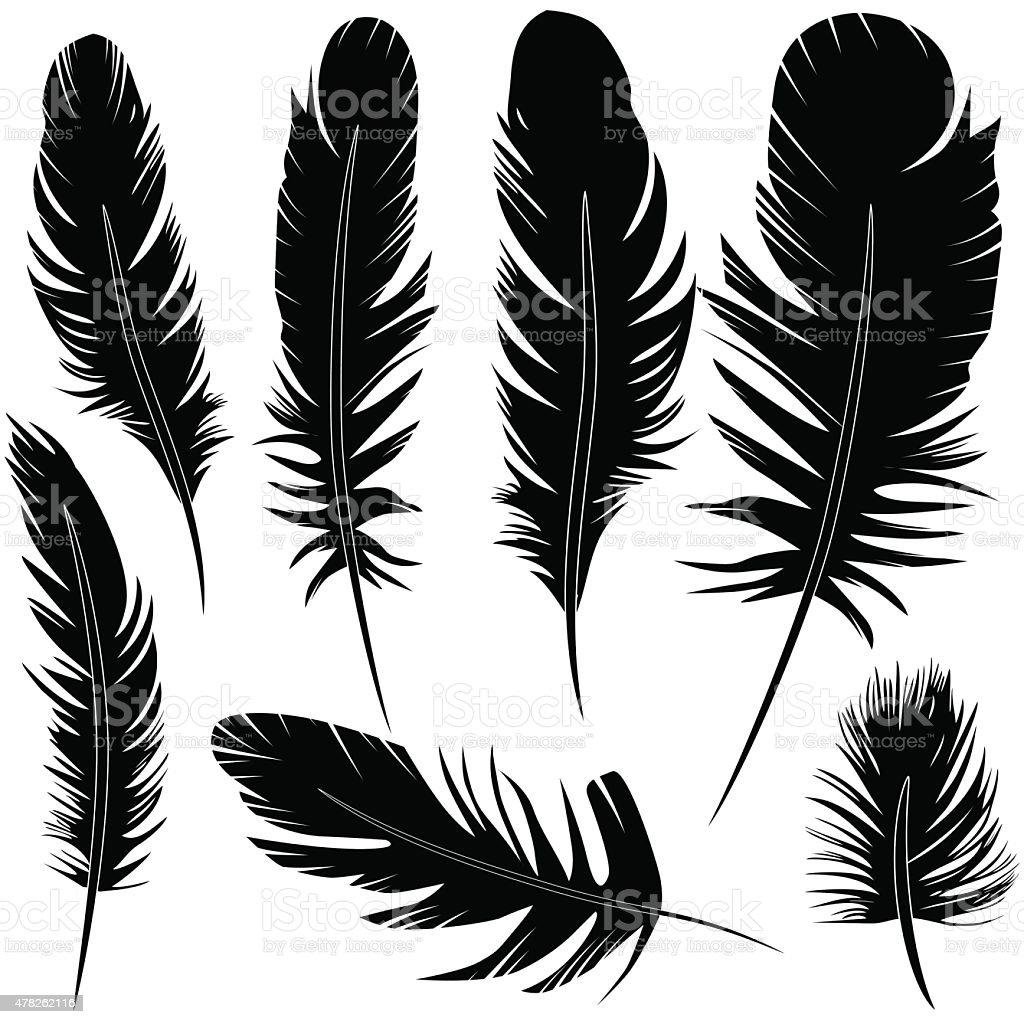 Feather of bird set vector illustration sketch vector art illustration