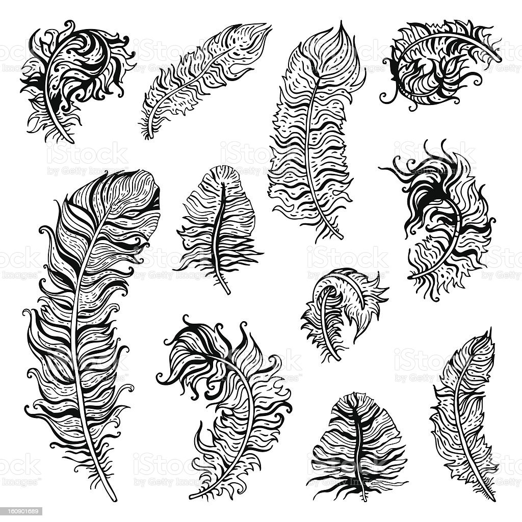 Feather Set royalty-free stock vector art