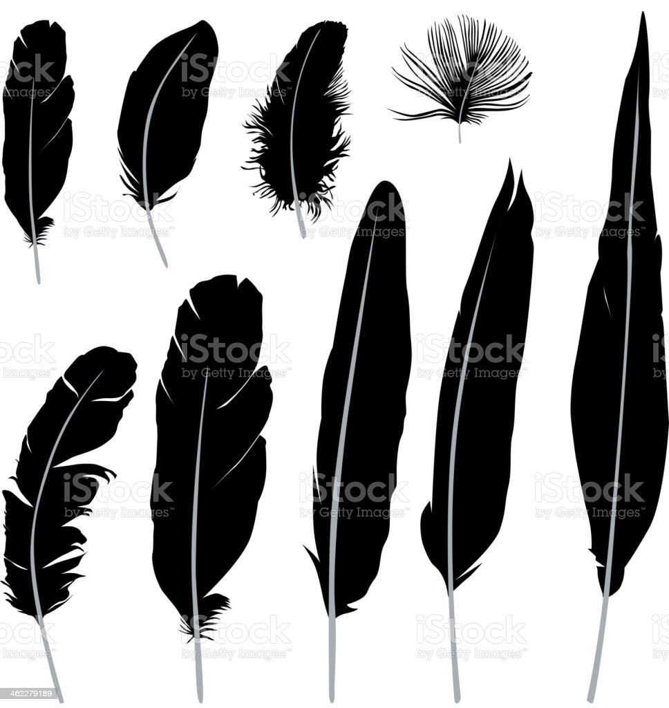 Feather silhouette collection vector art illustration