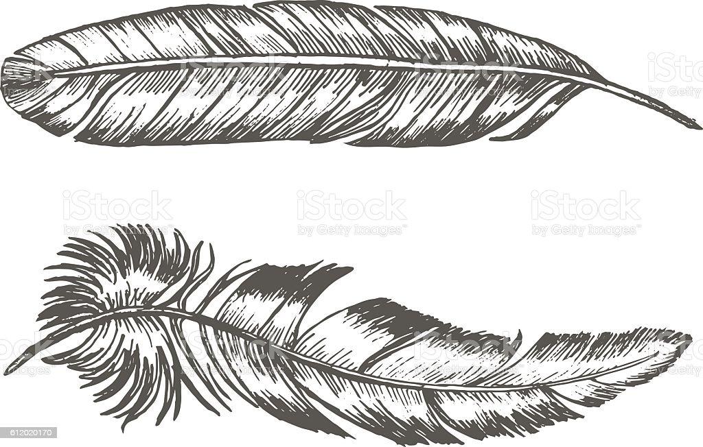 Feathers Set Hand Draw Sketch Trendy Tattoo Template Vector Stock