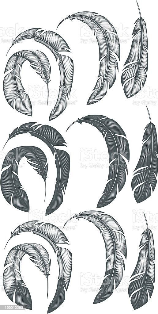 Feathers royalty-free stock vector art