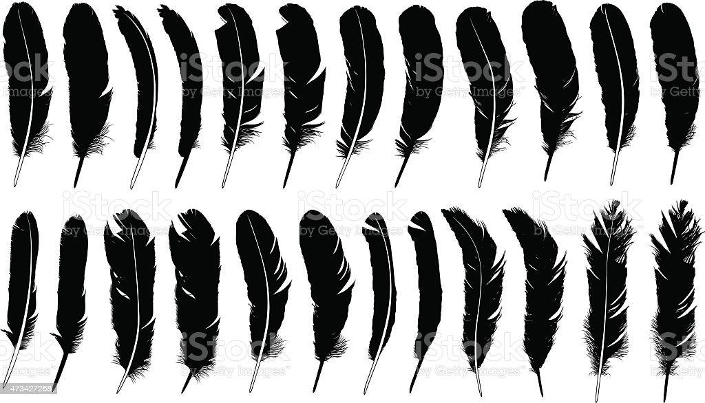 Feathers vector art illustration