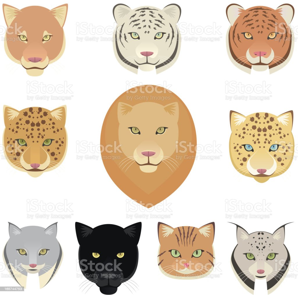 Felines leopard panther lion tiger cougar jaguar heads collection royalty-free stock vector art