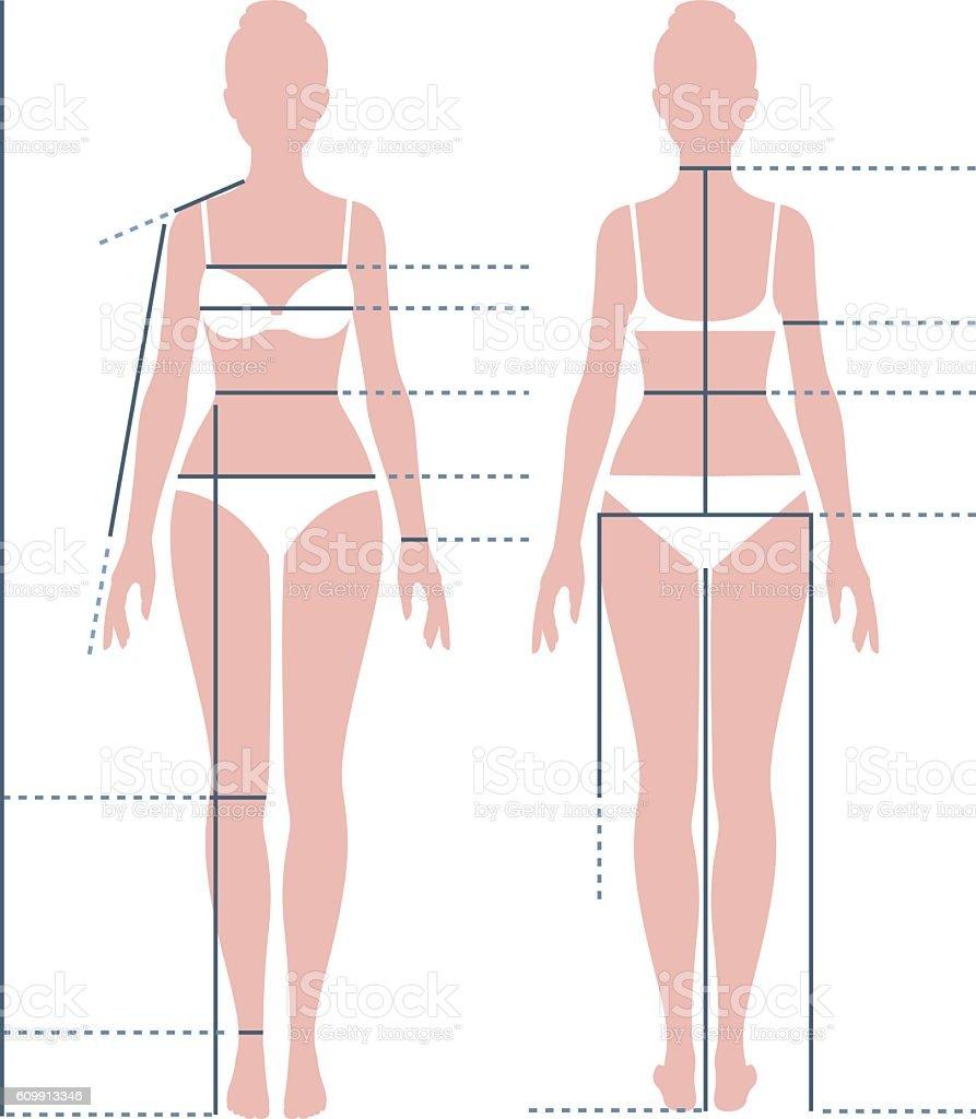 Female body in full length for measuring the size vector art illustration