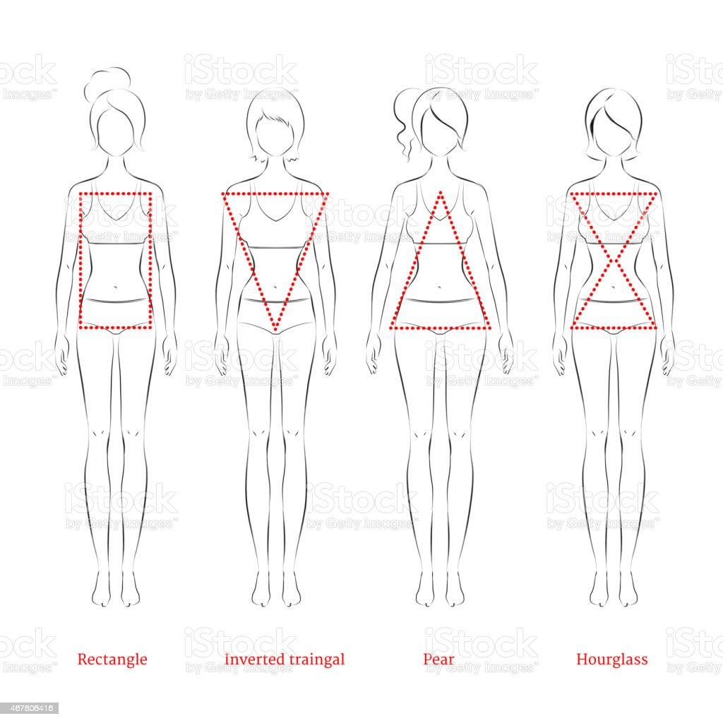 Female body types. vector art illustration