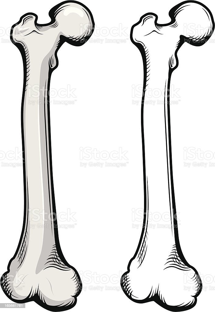 Femur bone illustration vector art illustration