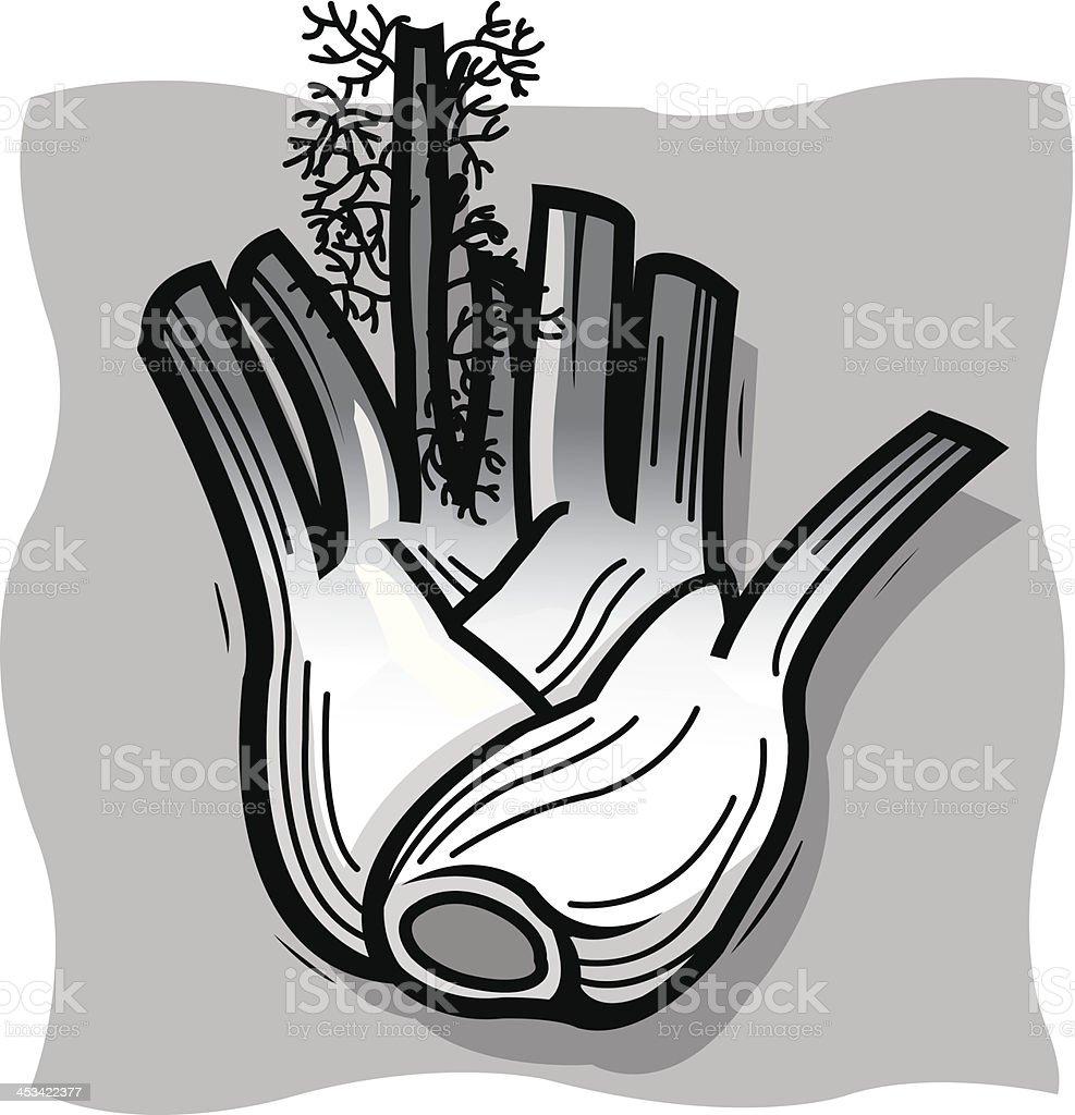 fennel bulb vector art illustration