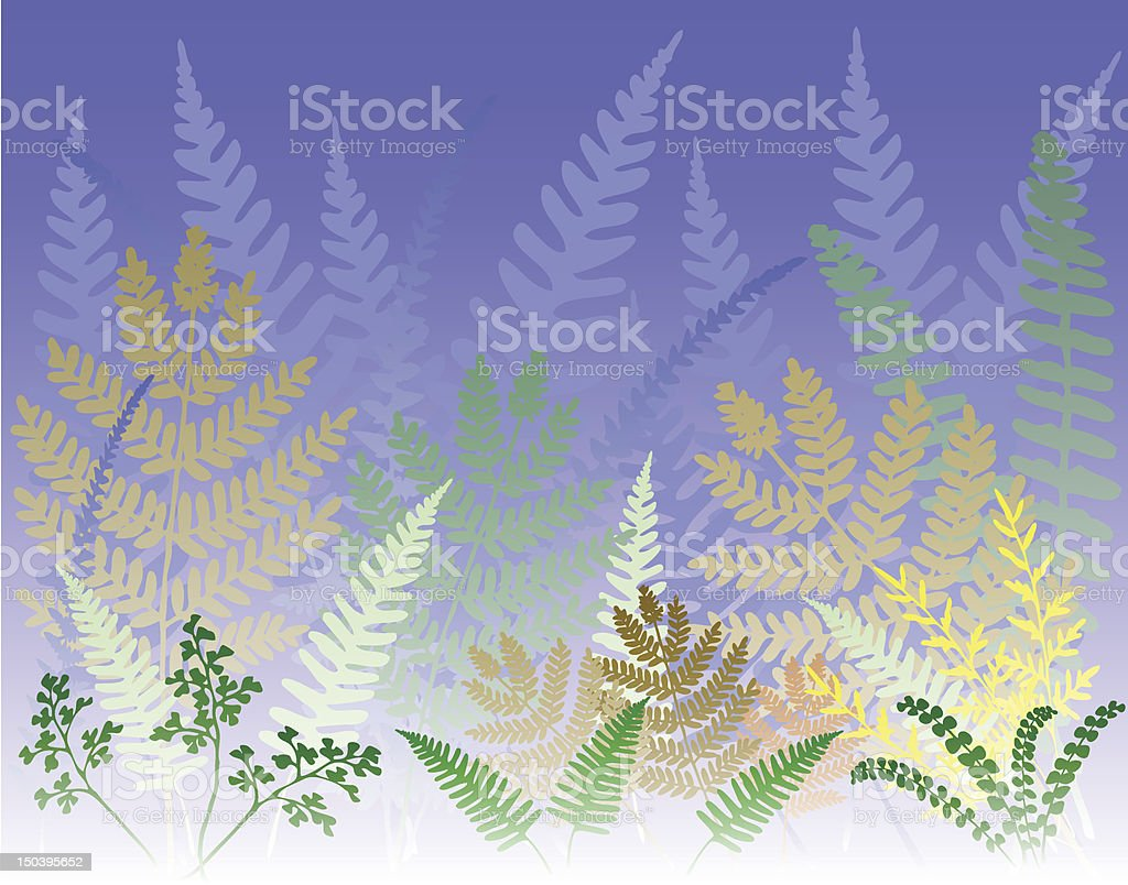 Fern forest royalty-free stock vector art