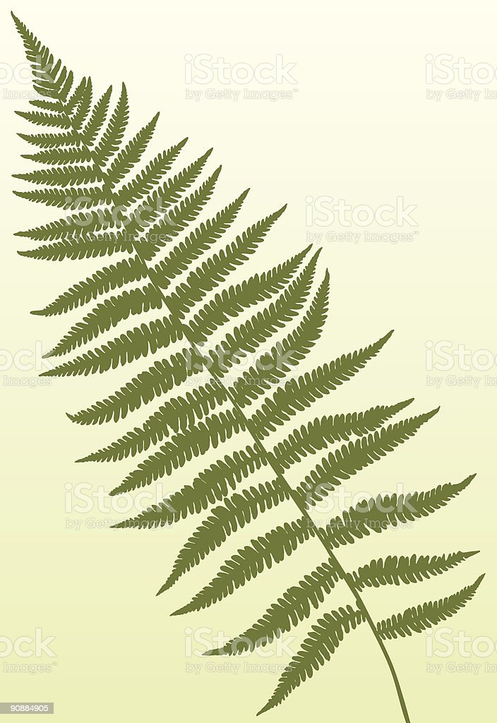 Fern frond royalty-free stock vector art
