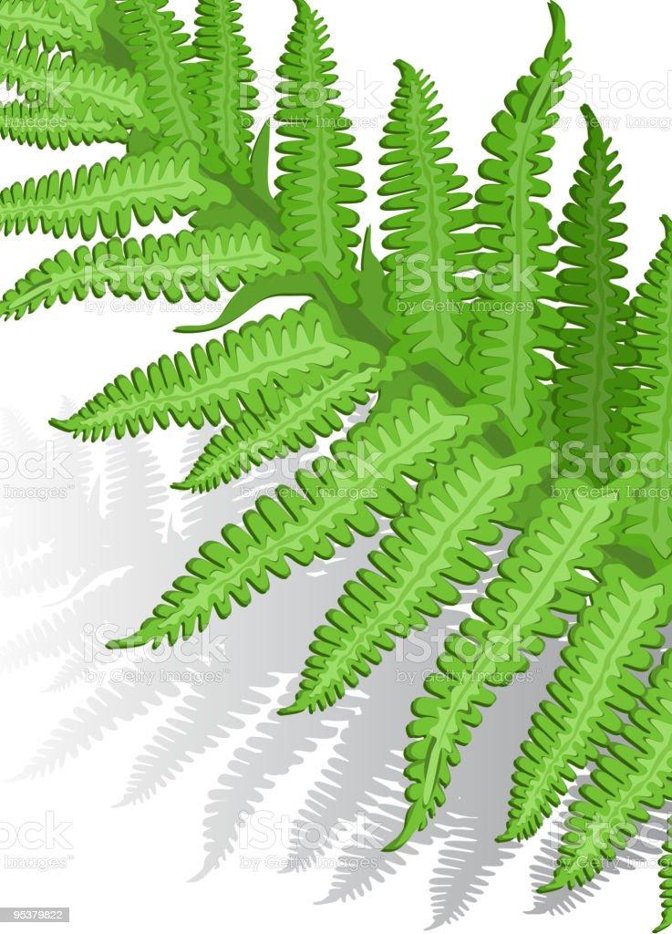 Fern leaf royalty-free stock vector art