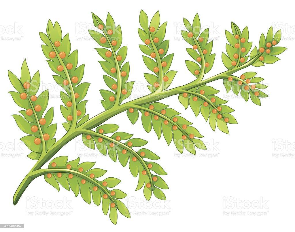 Fern plant vector art illustration