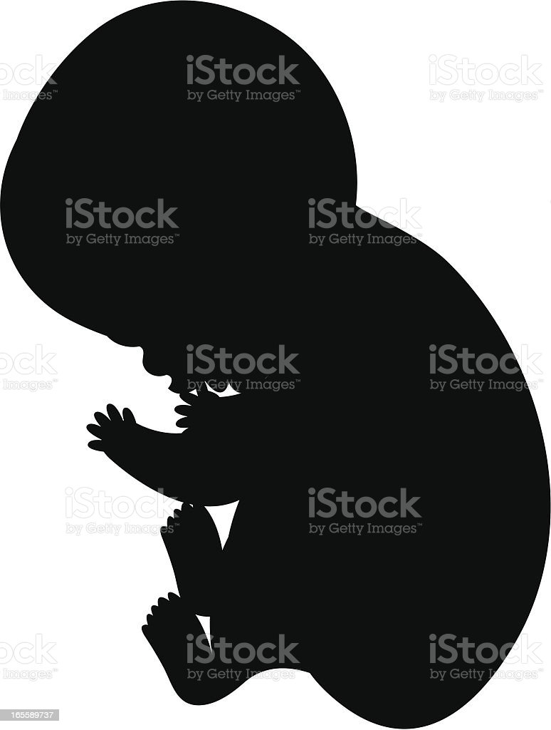 Fetus royalty-free stock vector art