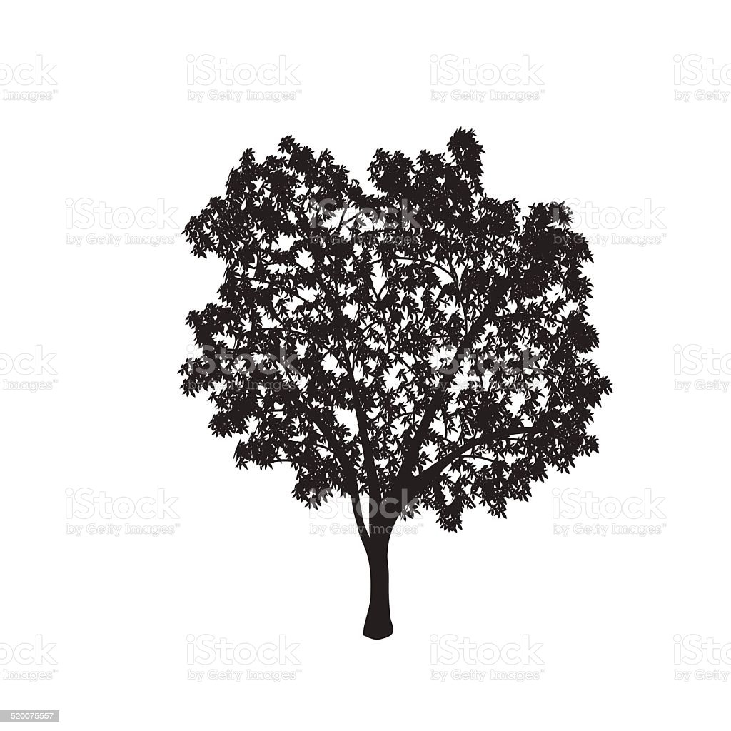 ficus tree silhouette with leaves vector art illustration