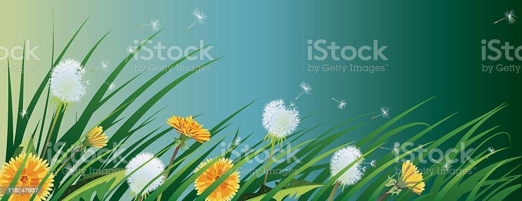 Field of Dandelions royalty-free stock vector art