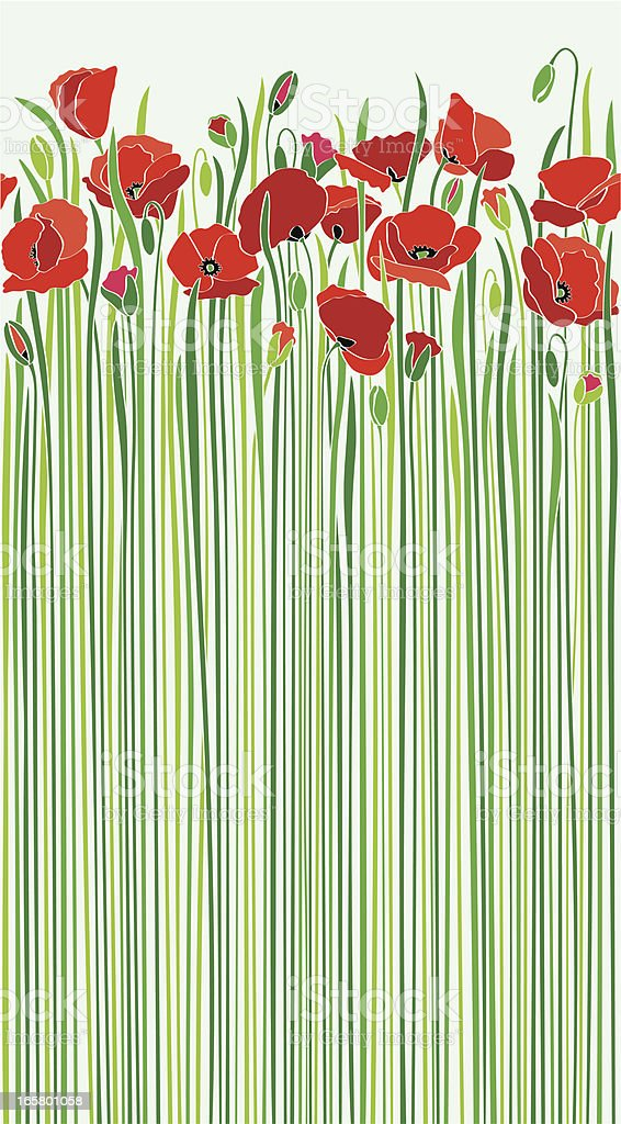 field of red poppies by the road in sunny spring vector art illustration
