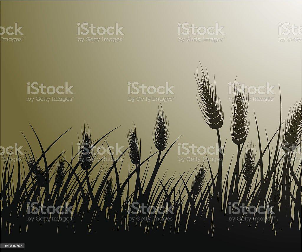 Field of wheat vector art illustration