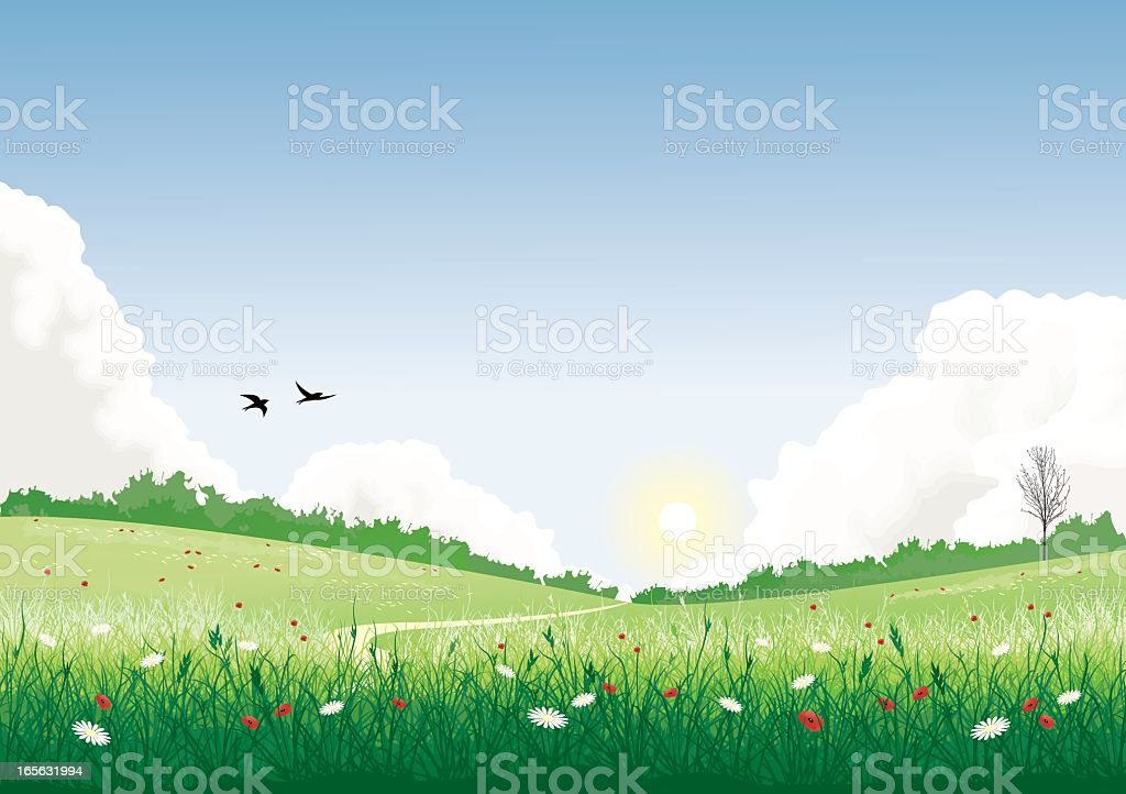 Field with wild flowers royalty-free stock vector art