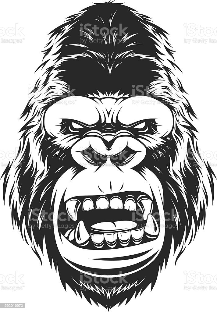 Fierce gorilla head vector art illustration
