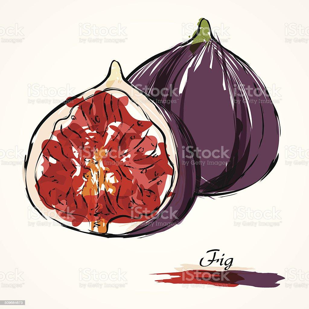 Fig fruit vector art illustration