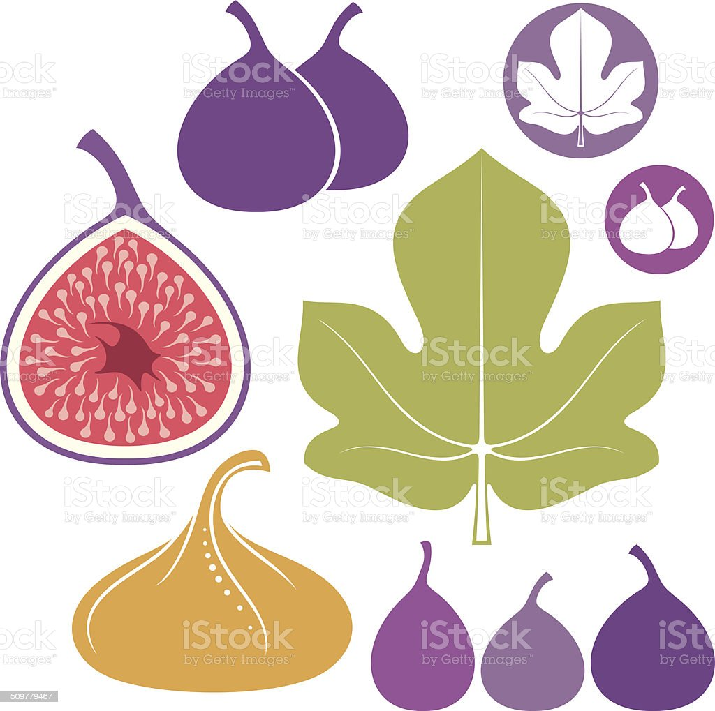 Fig. Set vector art illustration