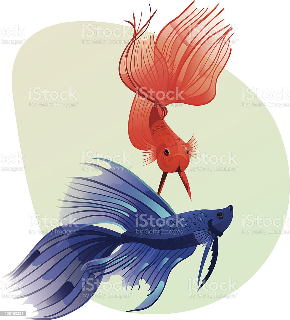 Fighting fishes royalty-free stock vector art