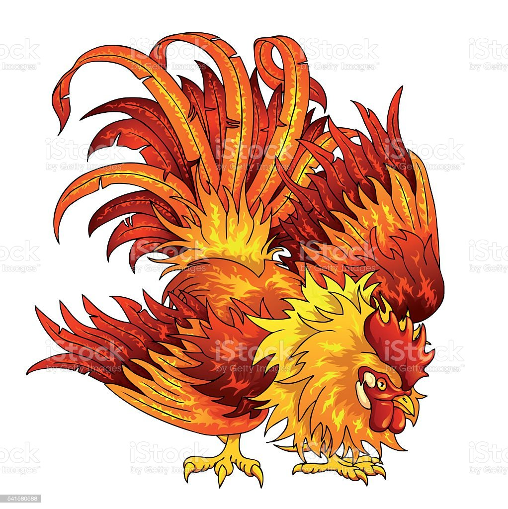 fighting orangered rooster on white stock vector art 541580588